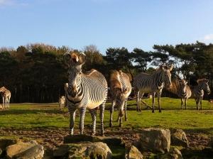 beste safariparken