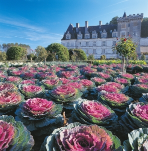 Kasteeltuin chateau de Villandry