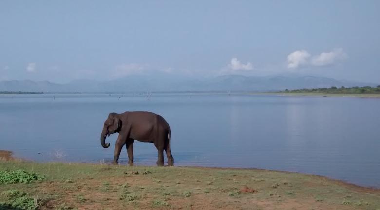 Olifanten zien in Sri Lanka