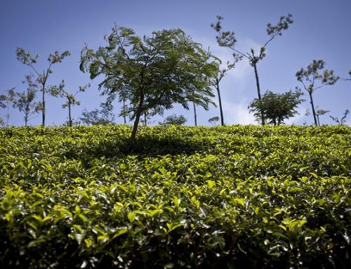 Theewalhalla Nuwara Eliya in Sri Lanka