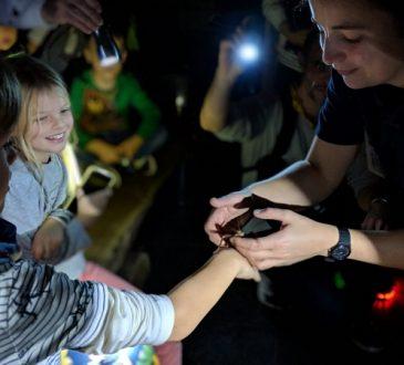 Dierentuin Berlijn night tour met kinderen