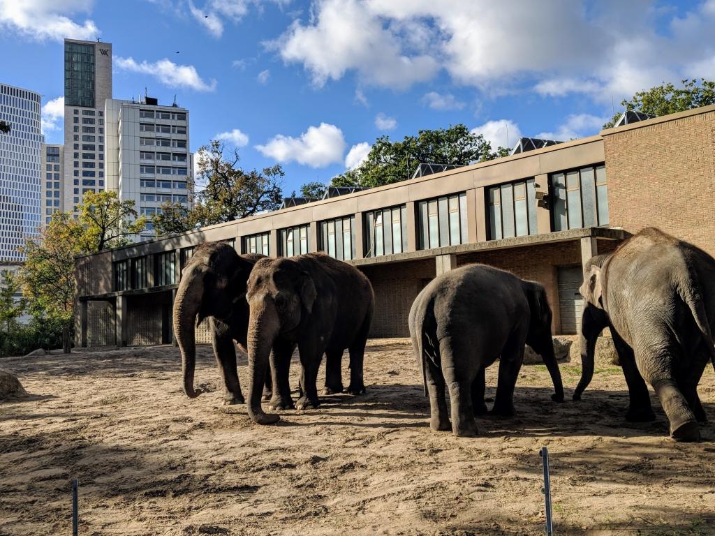 Leukste dierentuin Berlijn