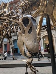 T-rex Berlijn
