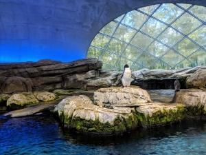 Berlin pinguin