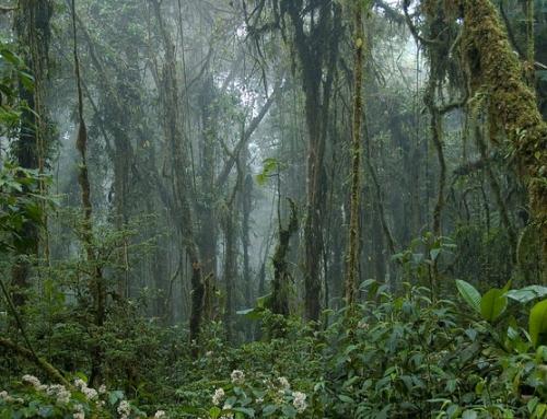 Mooi Monteverde