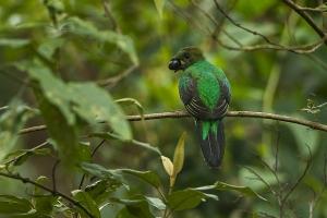 Monteverde groen nevelwoud