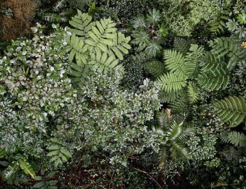 Monteverde-de beste parken