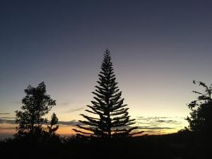 Monteverde night tour