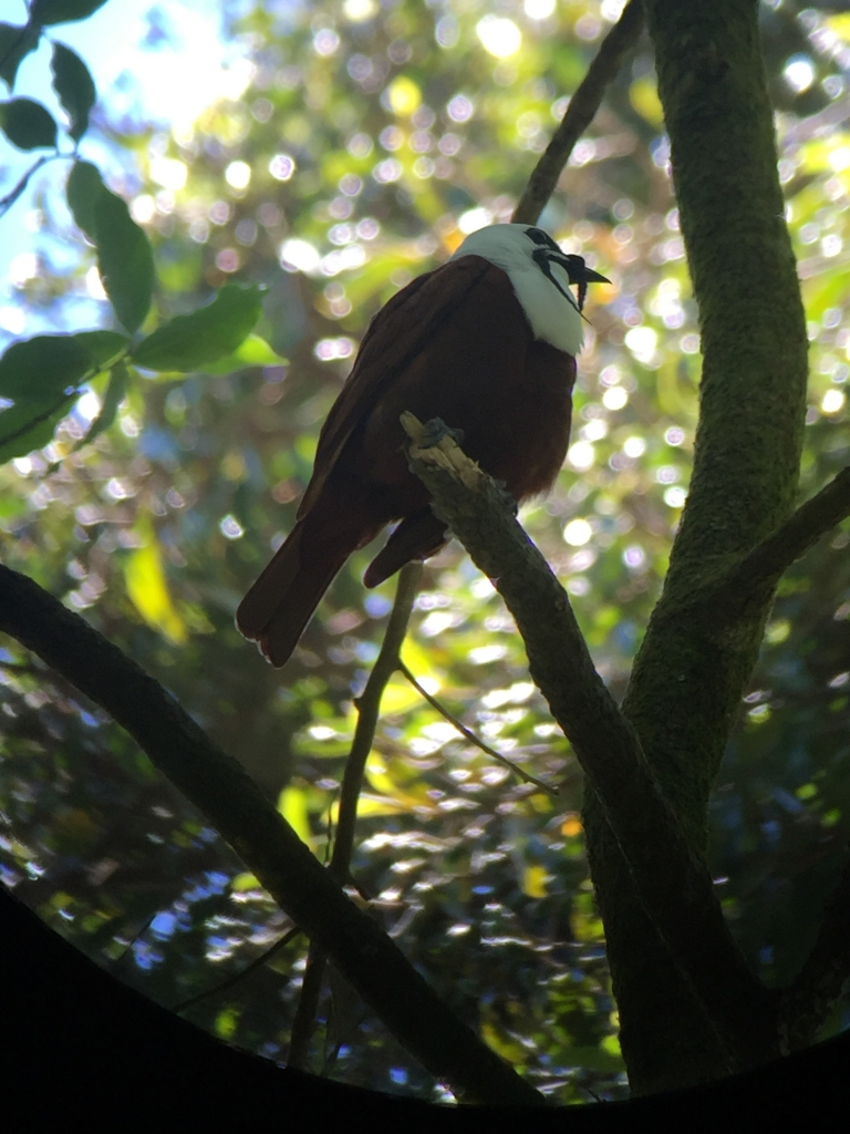 Vogelspotten Monteverde