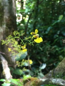 Monteverde plants