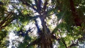 nationale parken van Monteverde