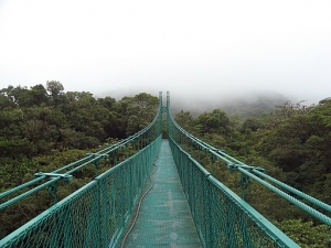Monteverde nevelwoud
