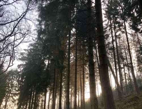 Natuur & cultuur in Duitsland
