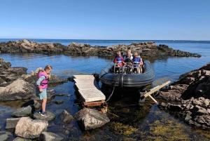 Whale safari Sweden