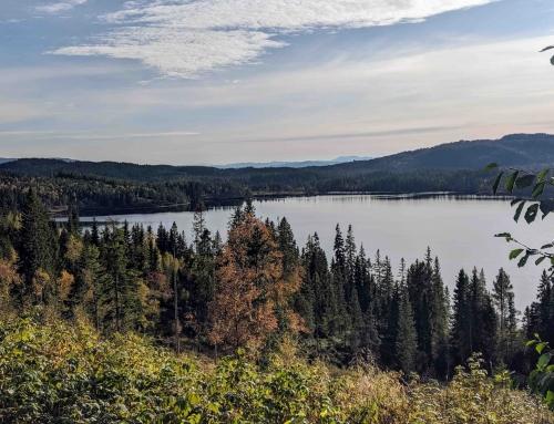 Wandeling in de natuur van Trondheim