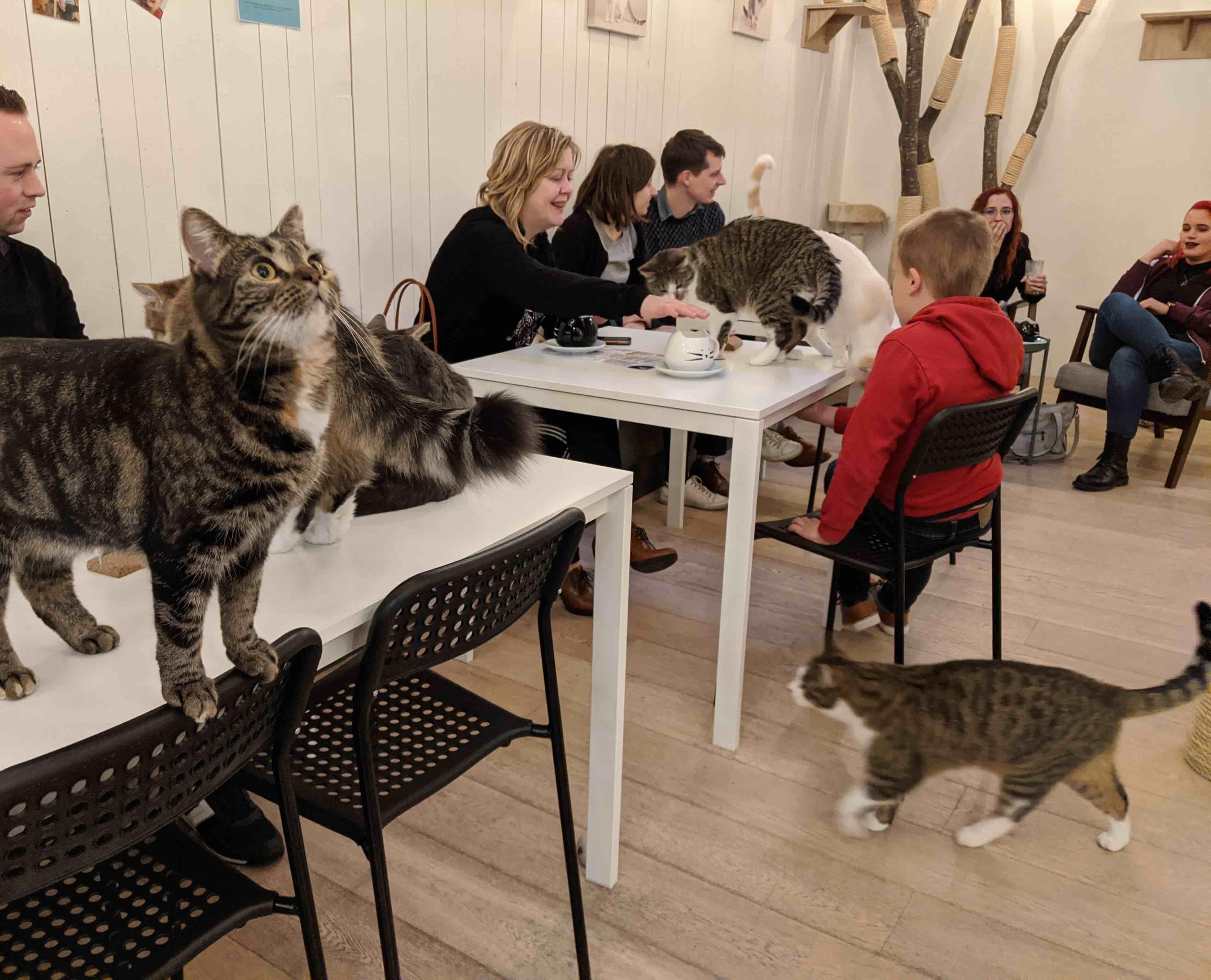 Kattencafé Kortijk