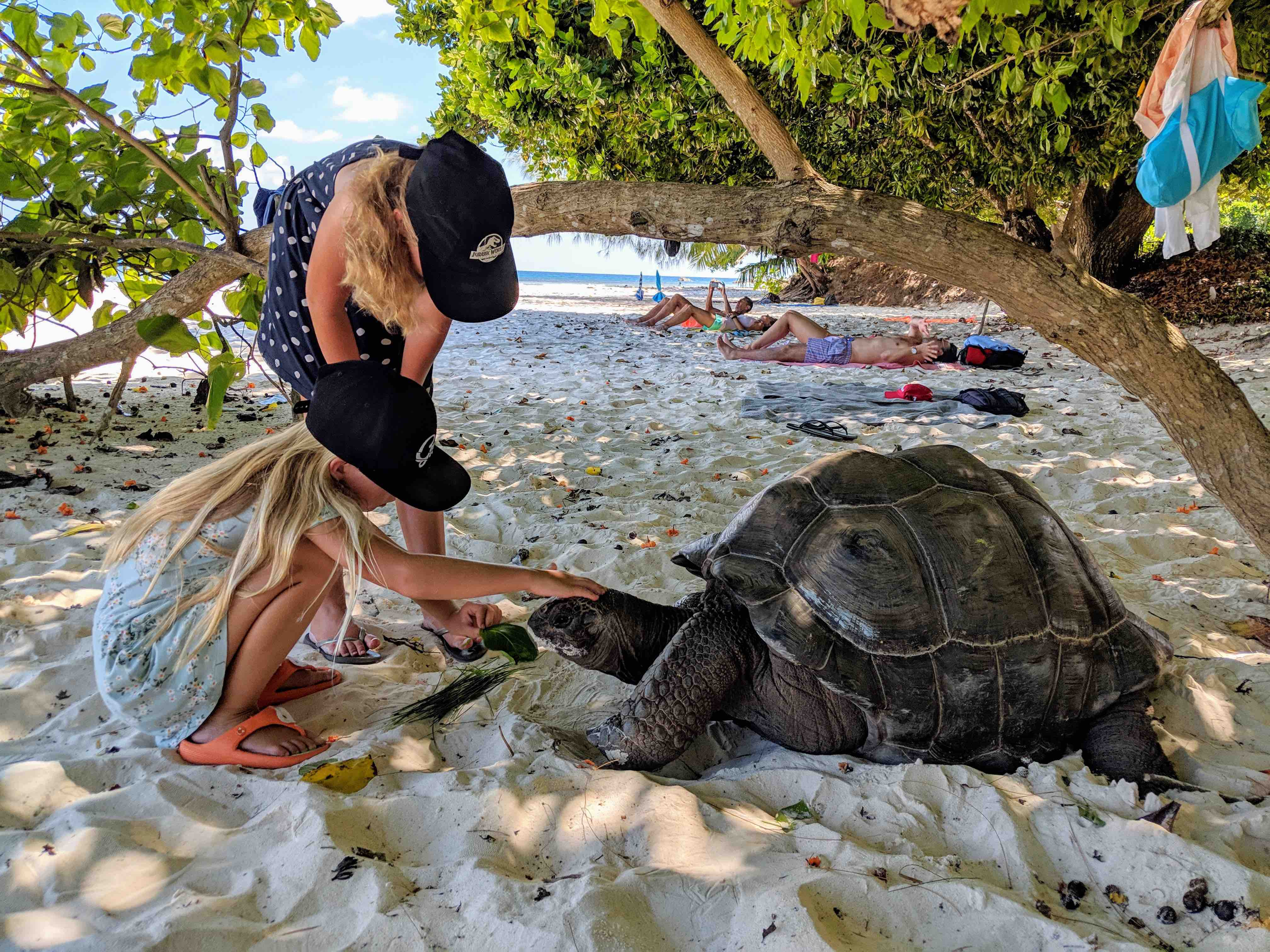 Giant turtle at the beach Seychelles