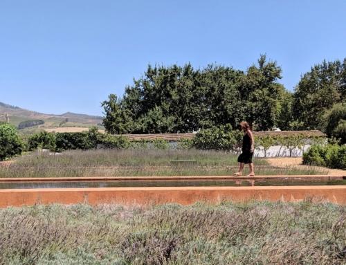 Tuinen Babylonstoren| Mooiste bezienswaardigheid Zuid-Afrika?