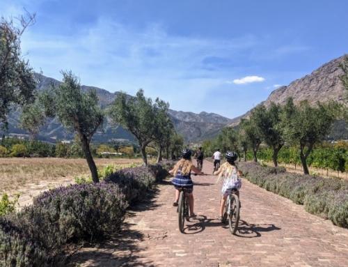 Wat te doen en te zien in Franschhoek?| Tips Zuid-Afrika