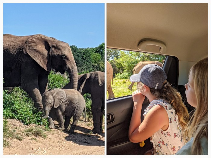 Addo olifantenpark