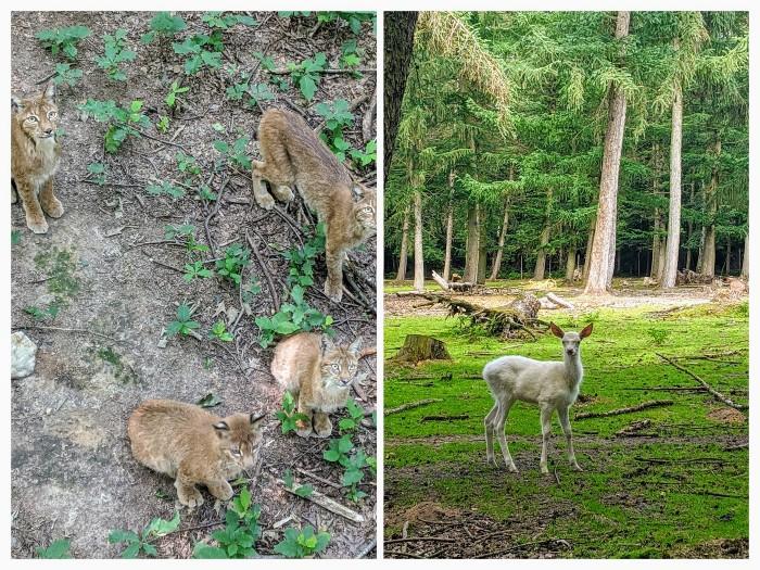 Wildpark Duitsland