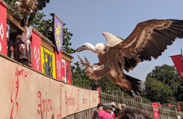 Birdshow Puy du Fou