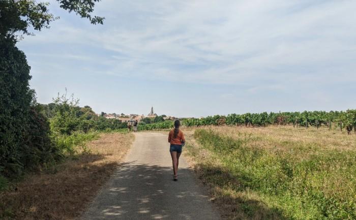 Wandelen wijngaarden Loire