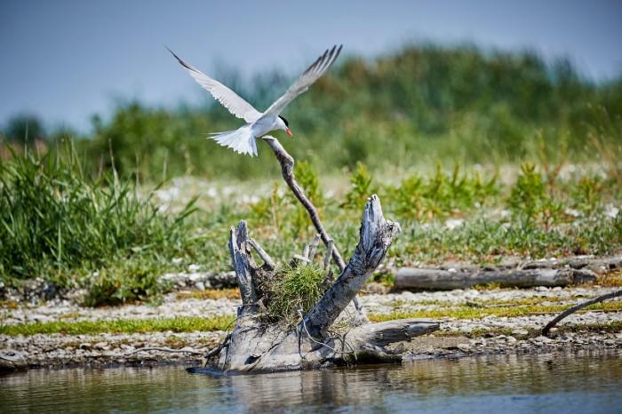 Vogels Markerwadden