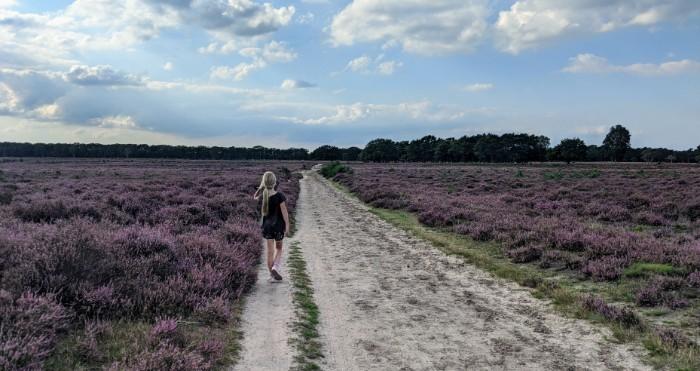 Heide in Bussum