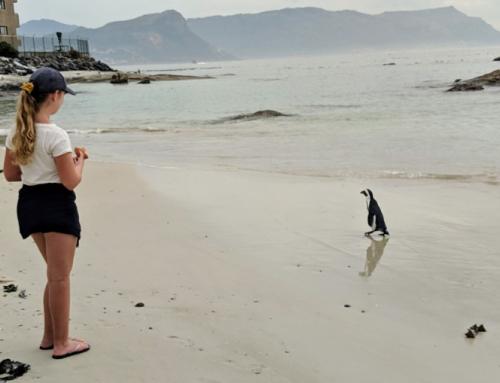 Waar penguïns spotten in Zuid-Afrika?