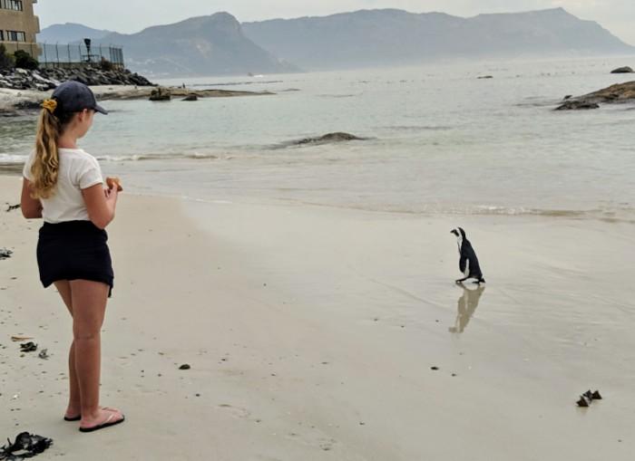 Pinguins met kinderen kijken
