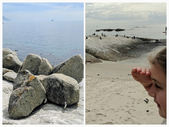 Foxy beach pinguins