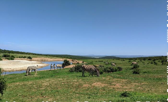 Wild spotten Zuid-Afrika