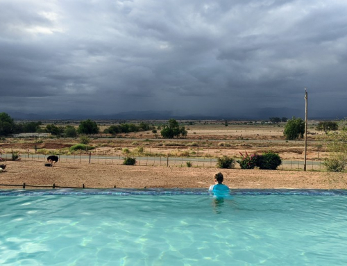 Waar overnachten en eten in Oudtshoorn?  Tuinroute Zuid-Afrika
