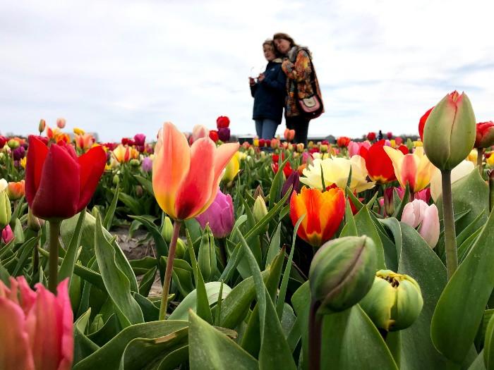 Foto's maken tussen de tulpen