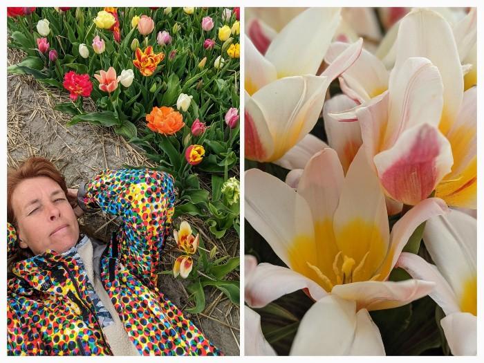 Tulpen Experience