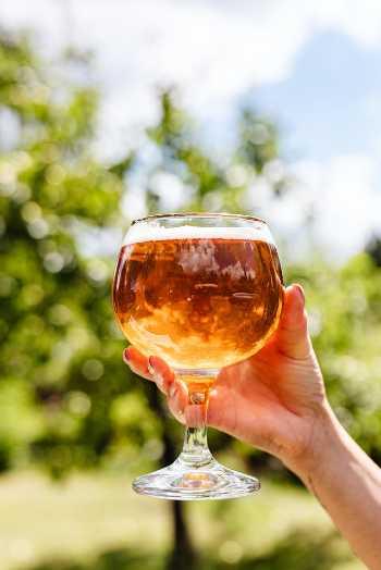Bier in Leuven