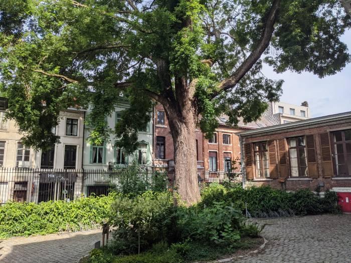 Stedentrip Leuven