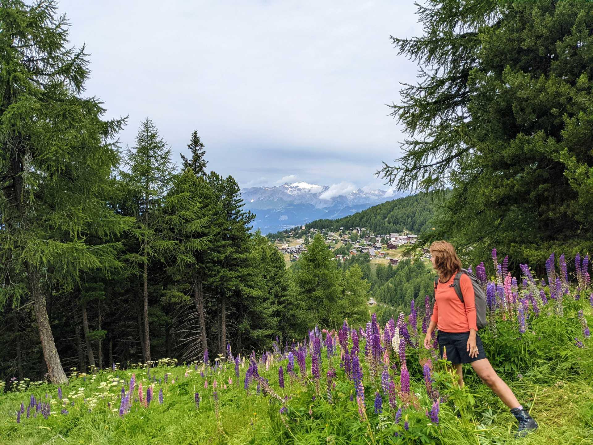 Alpenbloemen Zwitserland