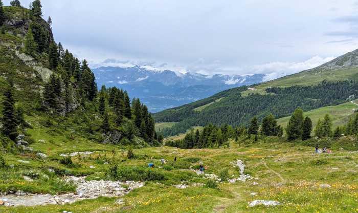 Bergweides Wallis Zwitserland